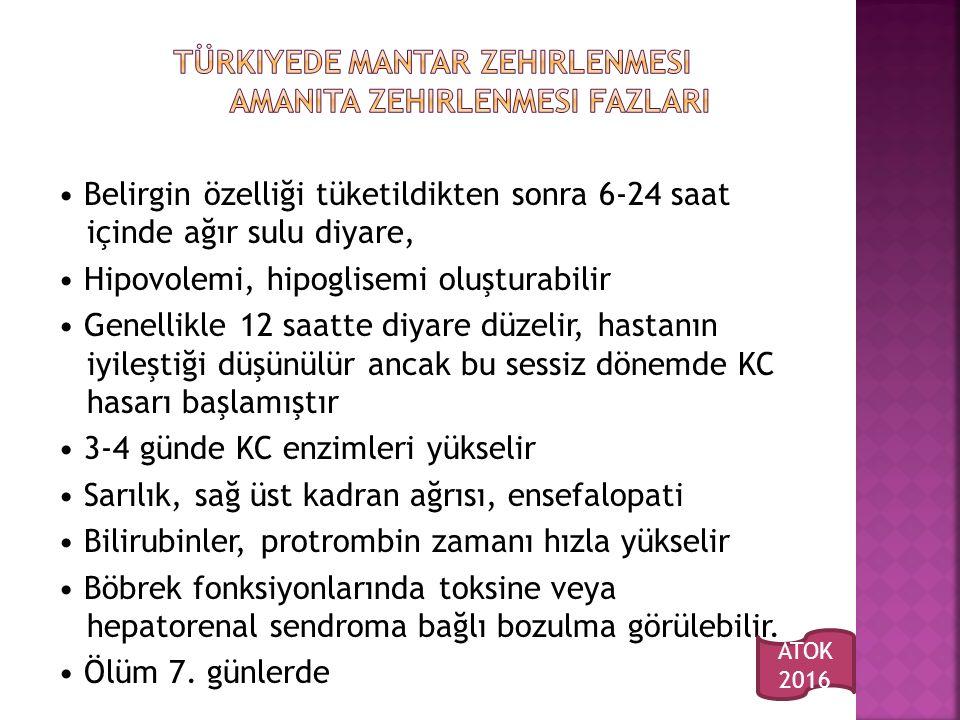 Türkiyede mantar zehirlenmesi Amanita zehirlenmesi fazlarI