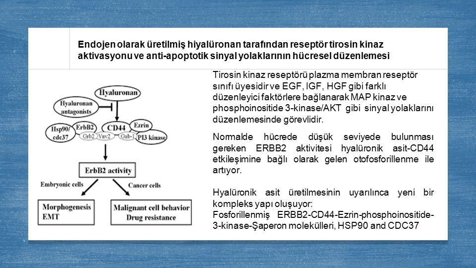 Endojen olarak üretilmiş hiyalüronan tarafından reseptör tirosin kinaz aktivasyonu ve anti-apoptotik sinyal yolaklarının hücresel düzenlemesi