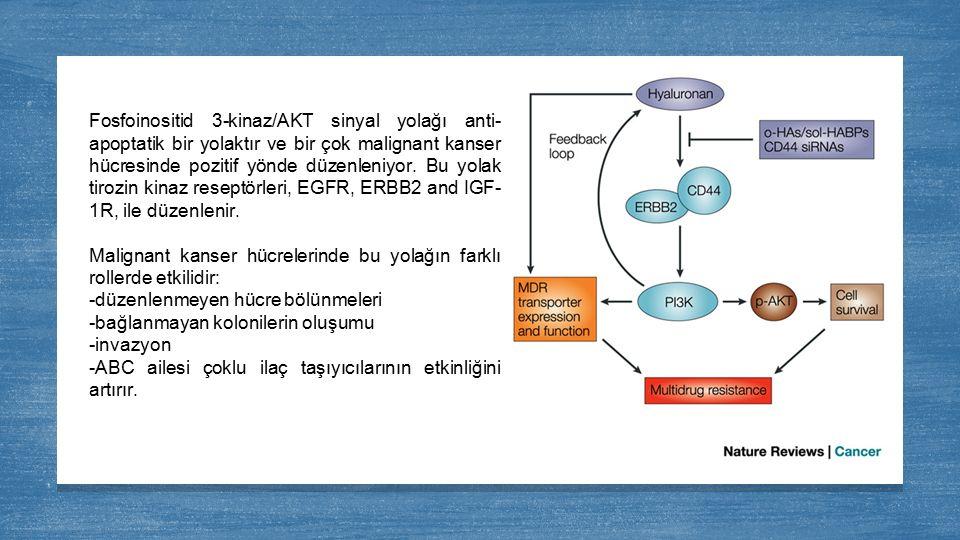 Fosfoinositid 3-kinaz/AKT sinyal yolağı anti-apoptatik bir yolaktır ve bir çok malignant kanser hücresinde pozitif yönde düzenleniyor. Bu yolak tirozin kinaz reseptörleri, EGFR, ERBB2 and IGF-1R, ile düzenlenir.
