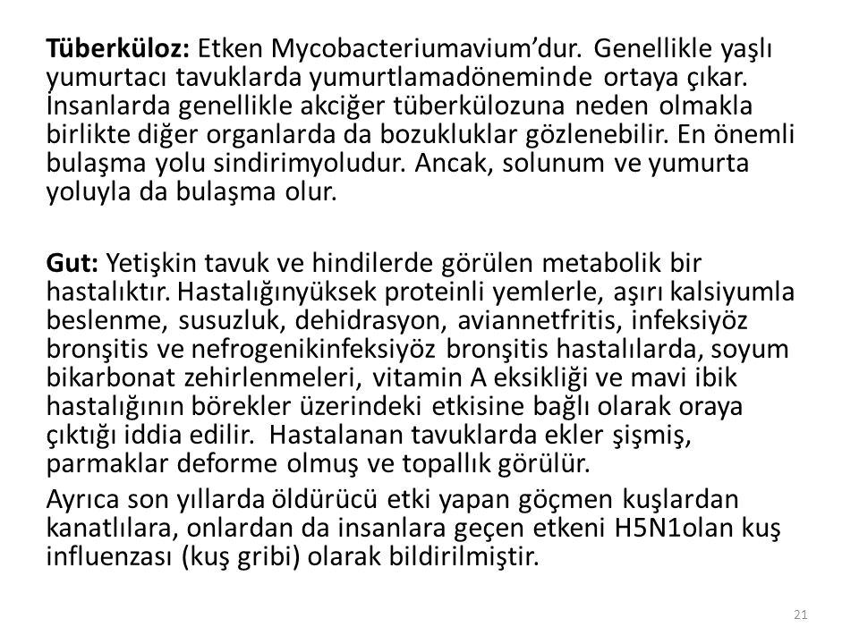 Tüberküloz: Etken Mycobacteriumavium'dur