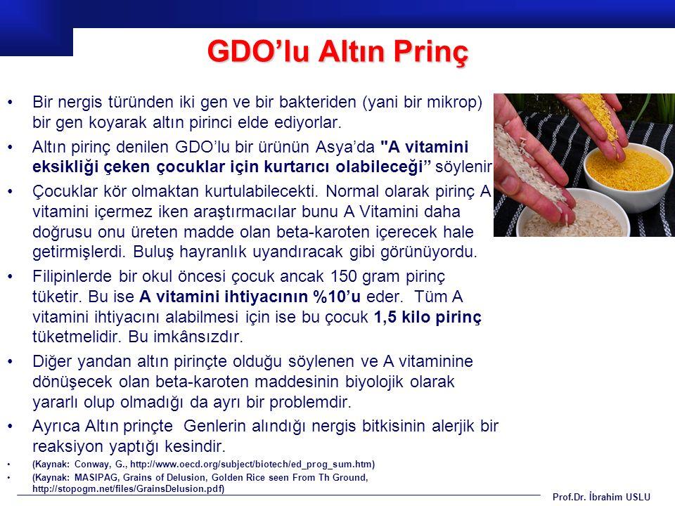 GDO'lu Altın Prinç Bir nergis türünden iki gen ve bir bakteriden (yani bir mikrop) bir gen koyarak altın pirinci elde ediyorlar.
