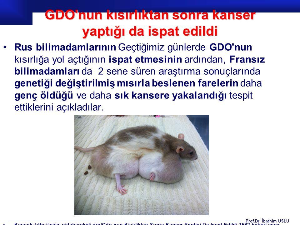 GDO nun kısırlıktan sonra kanser yaptığı da ispat edildi