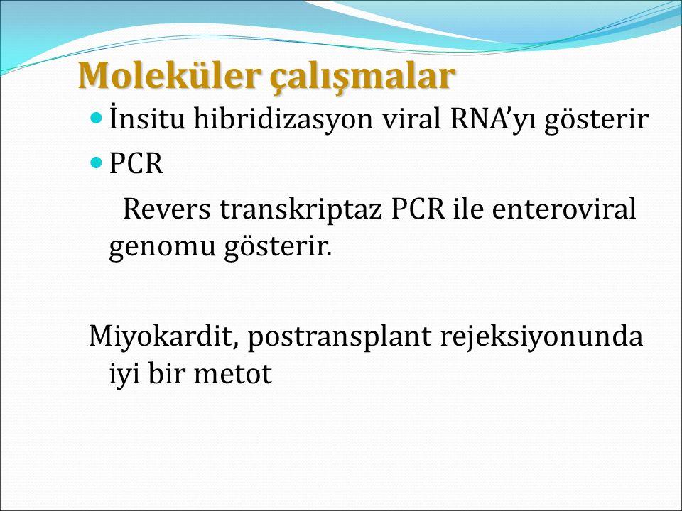Moleküler çalışmalar İnsitu hibridizasyon viral RNA'yı gösterir PCR