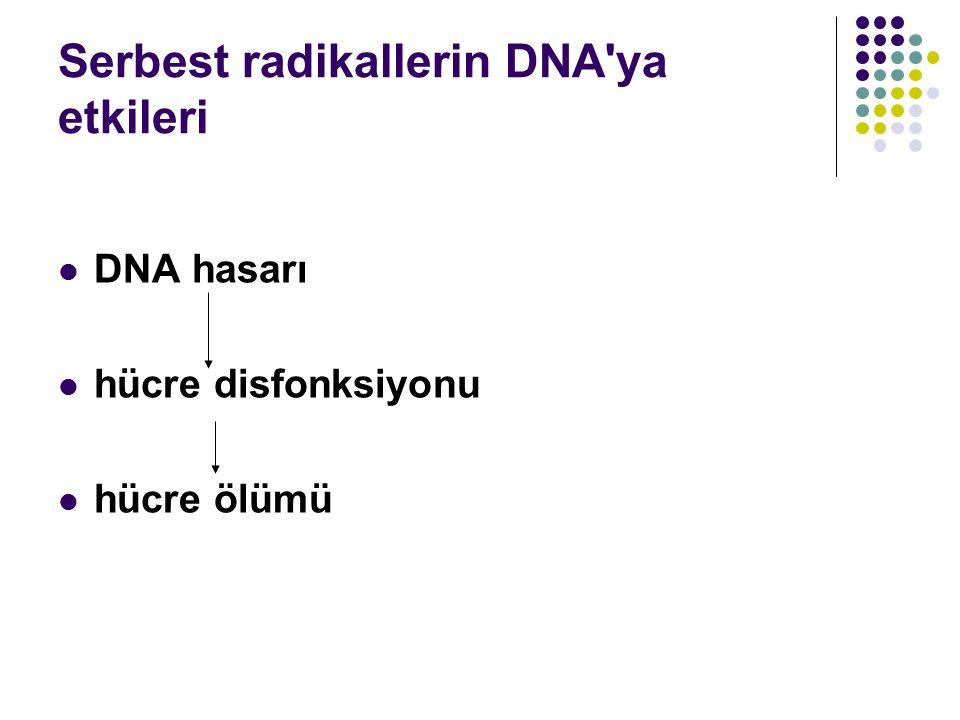 Serbest radikallerin DNA ya etkileri