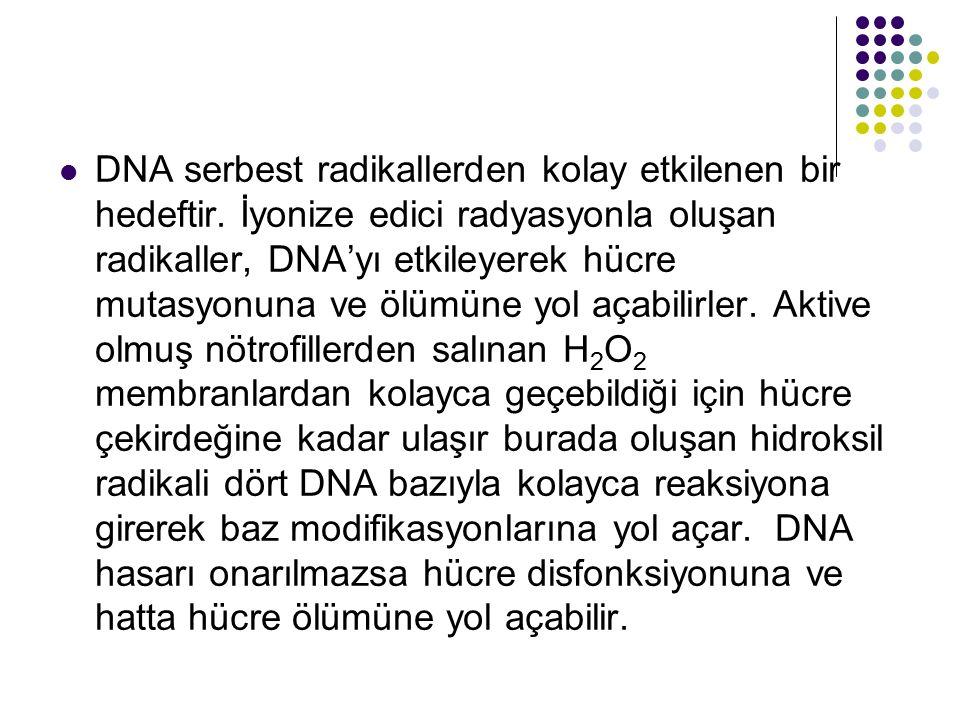 DNA serbest radikallerden kolay etkilenen bir hedeftir