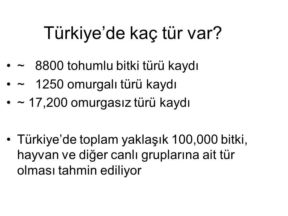 Türkiye'de kaç tür var ~ 8800 tohumlu bitki türü kaydı
