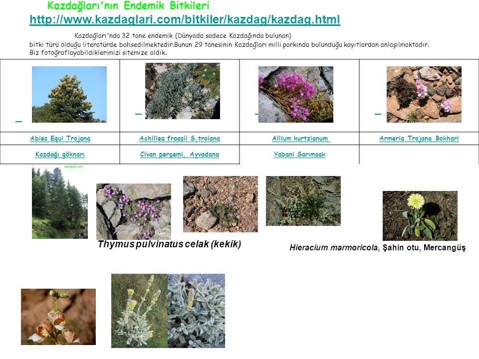 Kazdağları nda 32 tane endemik (Dünyada sadece Kazdağında bulunan)