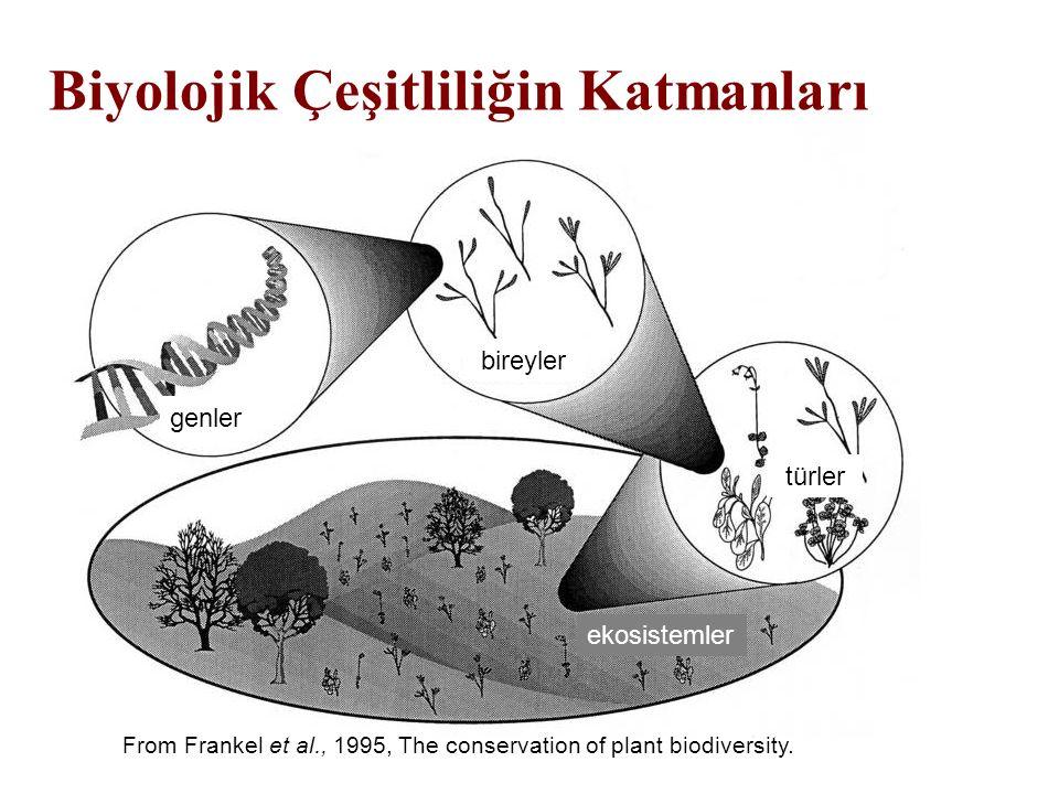 Biyolojik Çeşitliliğin Katmanları