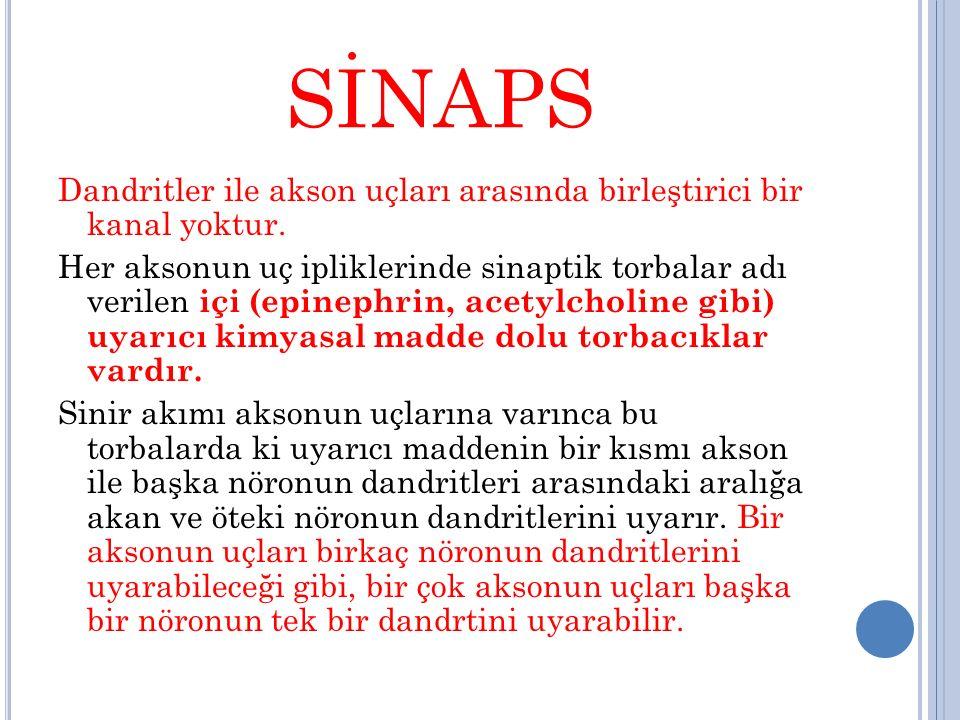 SİNAPS