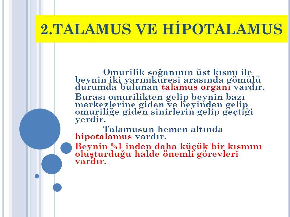 2.TALAMUS VE HİPOTALAMUS