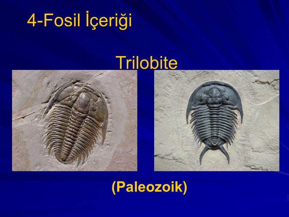 4-Fosil İçeriği Trilobite (Paleozoik)