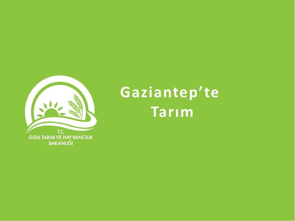 Gaziantep'te Tarım