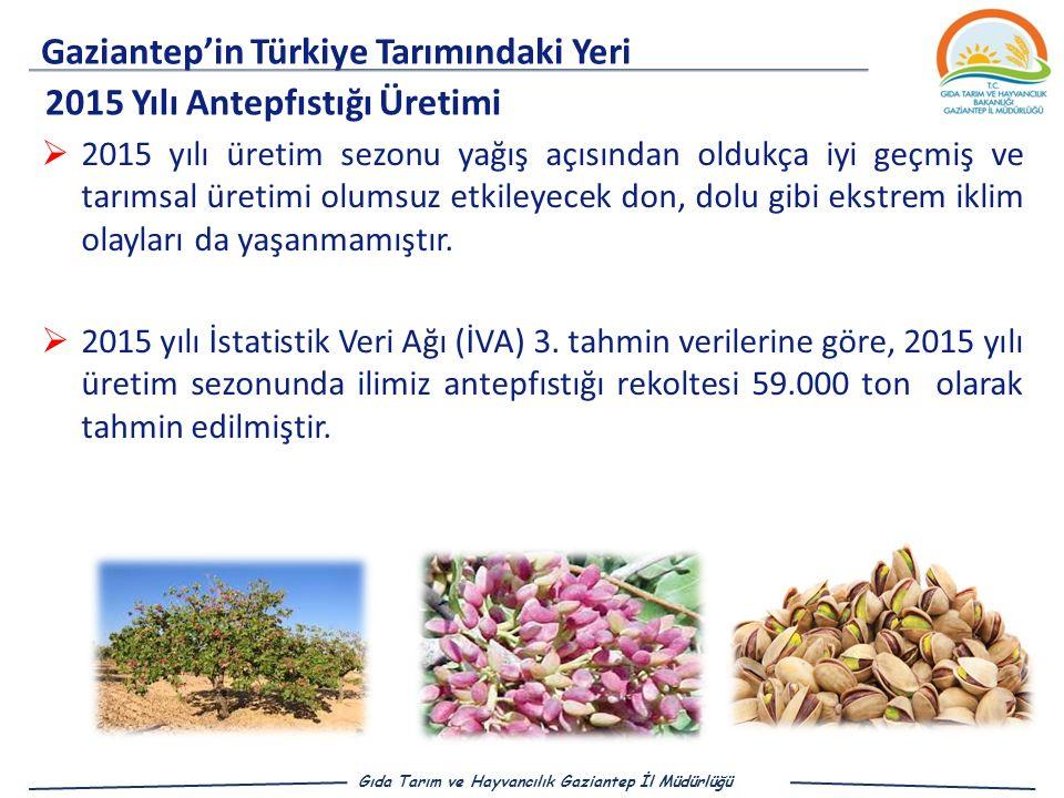Gaziantep'in Türkiye Tarımındaki Yeri 2015 Yılı Antepfıstığı Üretimi