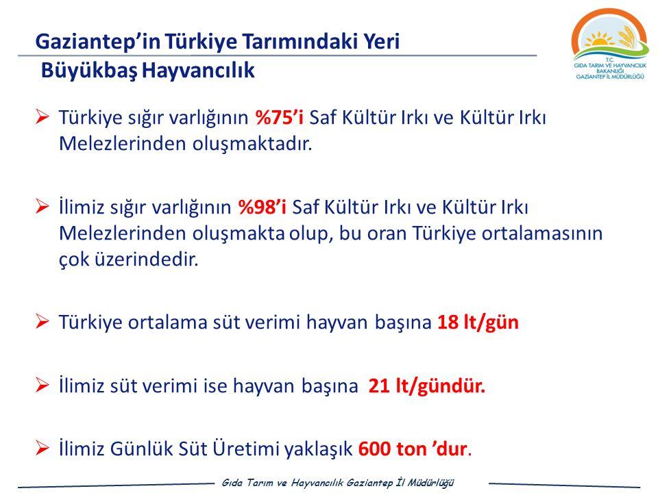 Gaziantep'in Türkiye Tarımındaki Yeri Büyükbaş Hayvancılık