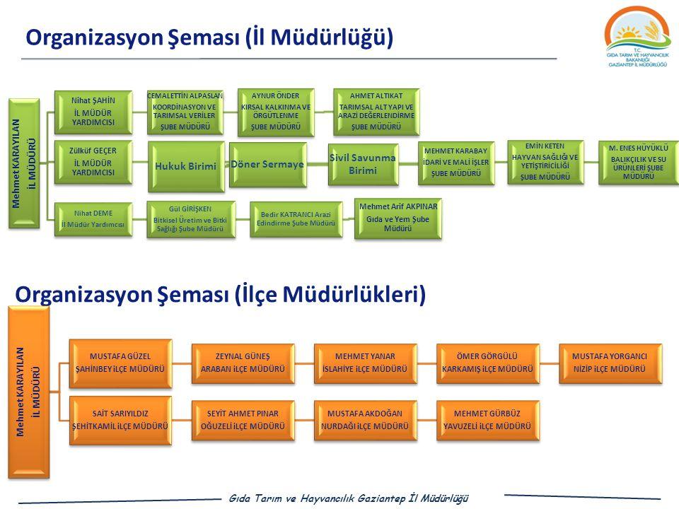 Organizasyon Şeması (İl Müdürlüğü)