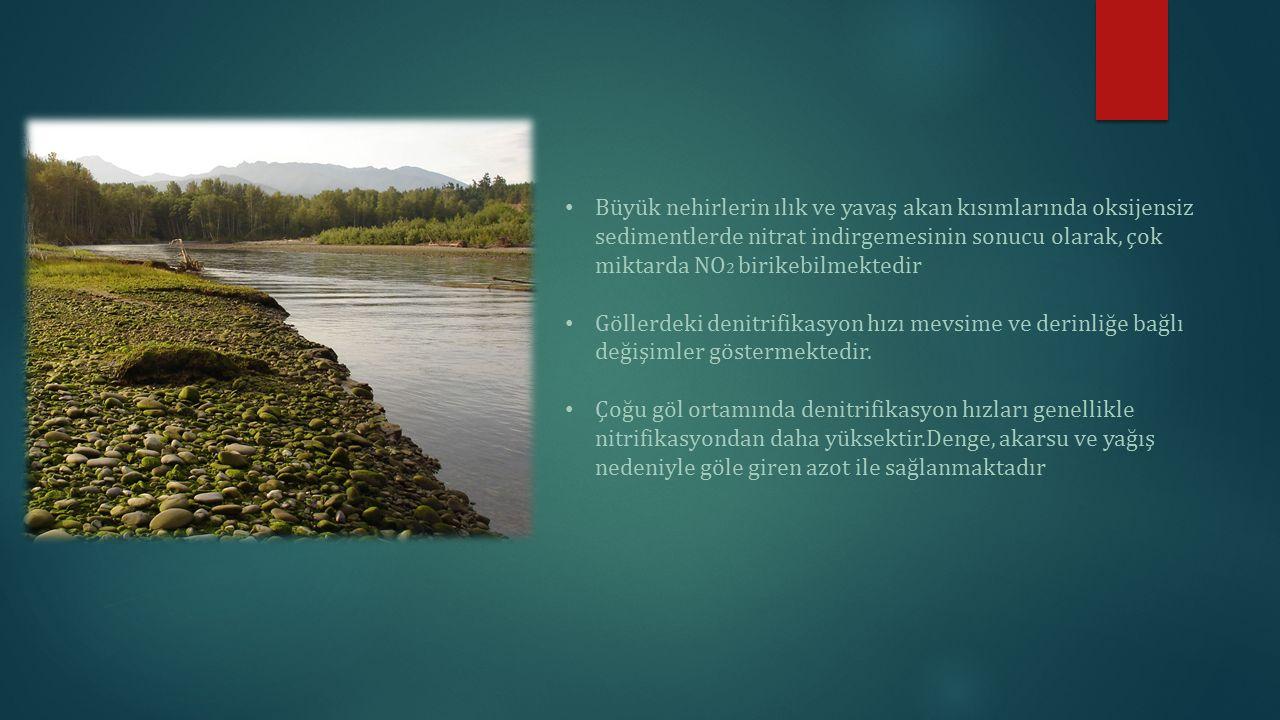 Büyük nehirlerin ılık ve yavaş akan kısımlarında oksijensiz sedimentlerde nitrat indirgemesinin sonucu olarak, çok miktarda NO2 birikebilmektedir