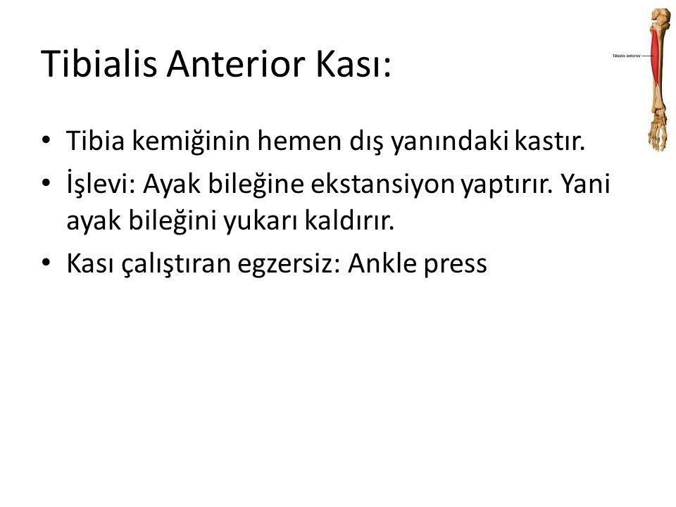Tibialis Anterior Kası:
