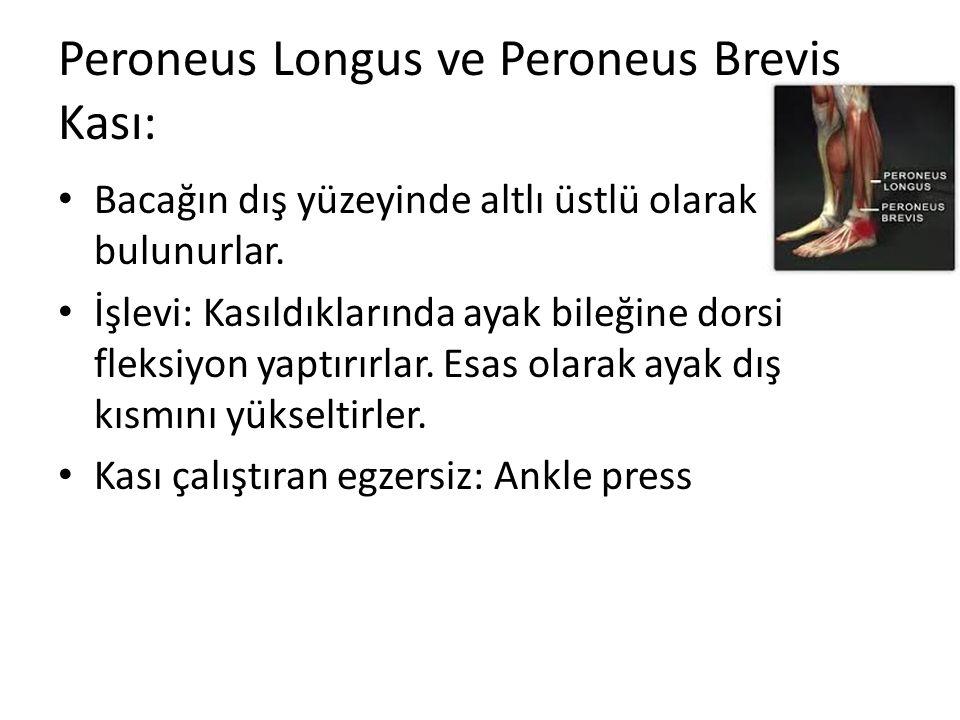 Peroneus Longus ve Peroneus Brevis Kası: