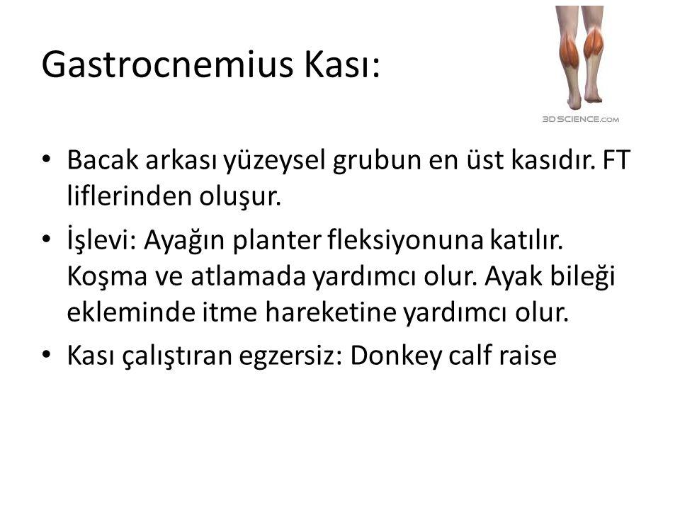 Gastrocnemius Kası: Bacak arkası yüzeysel grubun en üst kasıdır. FT liflerinden oluşur.
