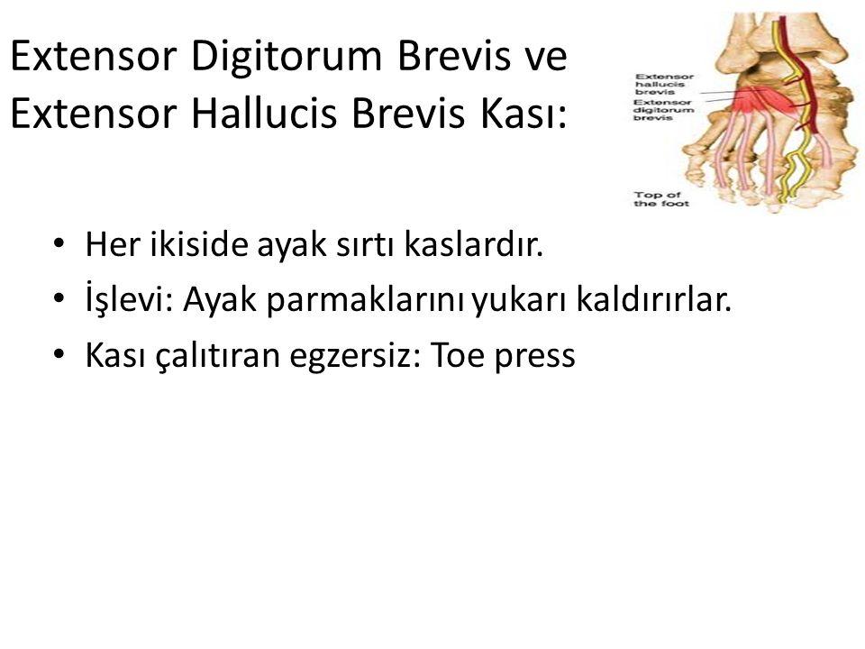 Extensor Digitorum Brevis ve Extensor Hallucis Brevis Kası: