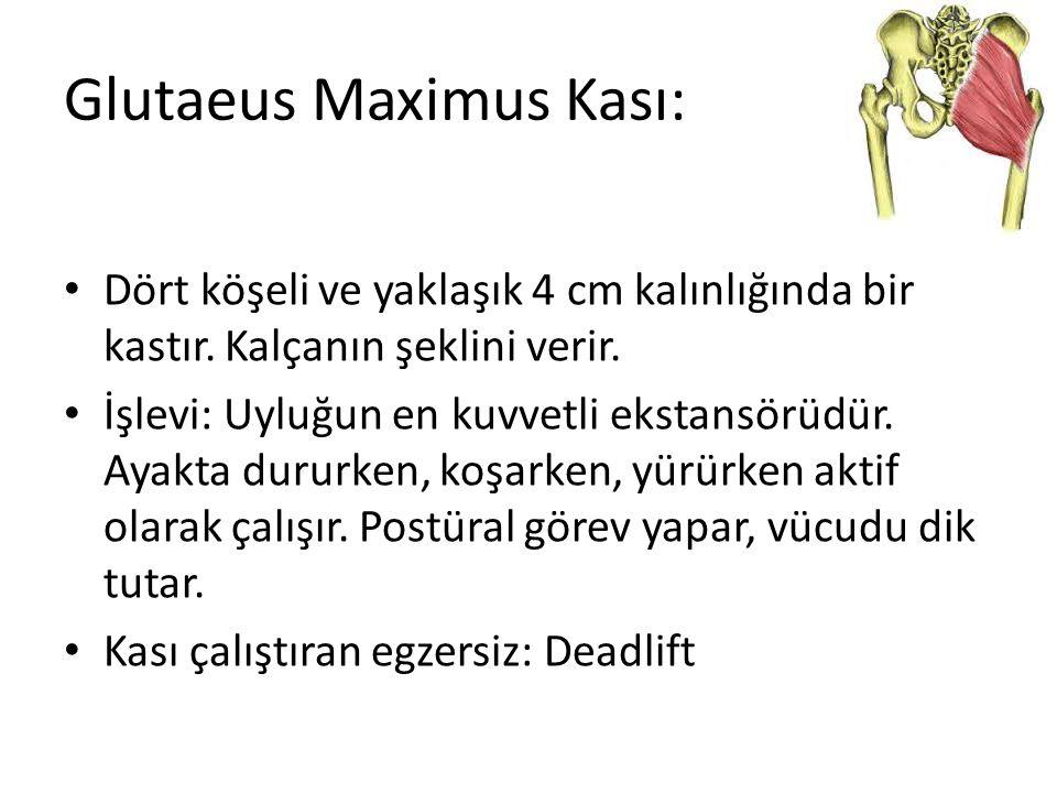Glutaeus Maximus Kası: