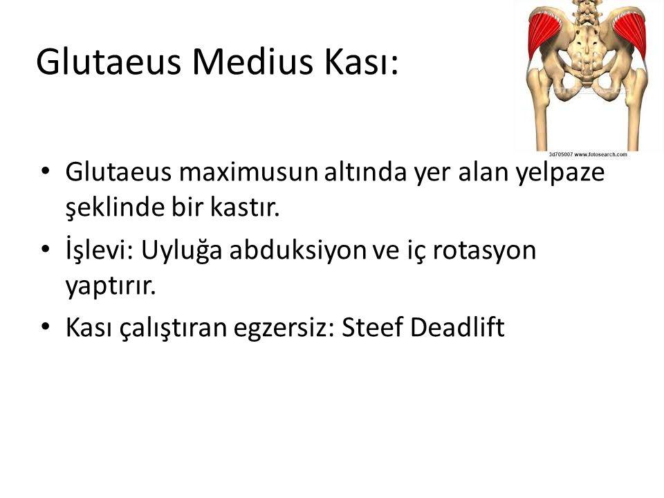 Glutaeus Medius Kası: Glutaeus maximusun altında yer alan yelpaze şeklinde bir kastır. İşlevi: Uyluğa abduksiyon ve iç rotasyon yaptırır.
