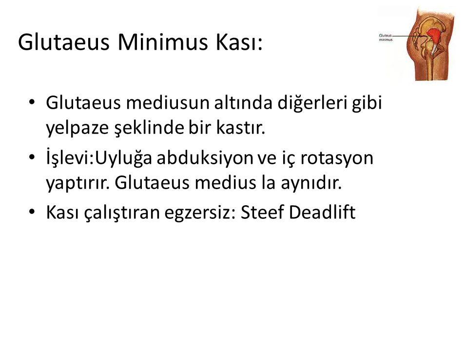 Glutaeus Minimus Kası: