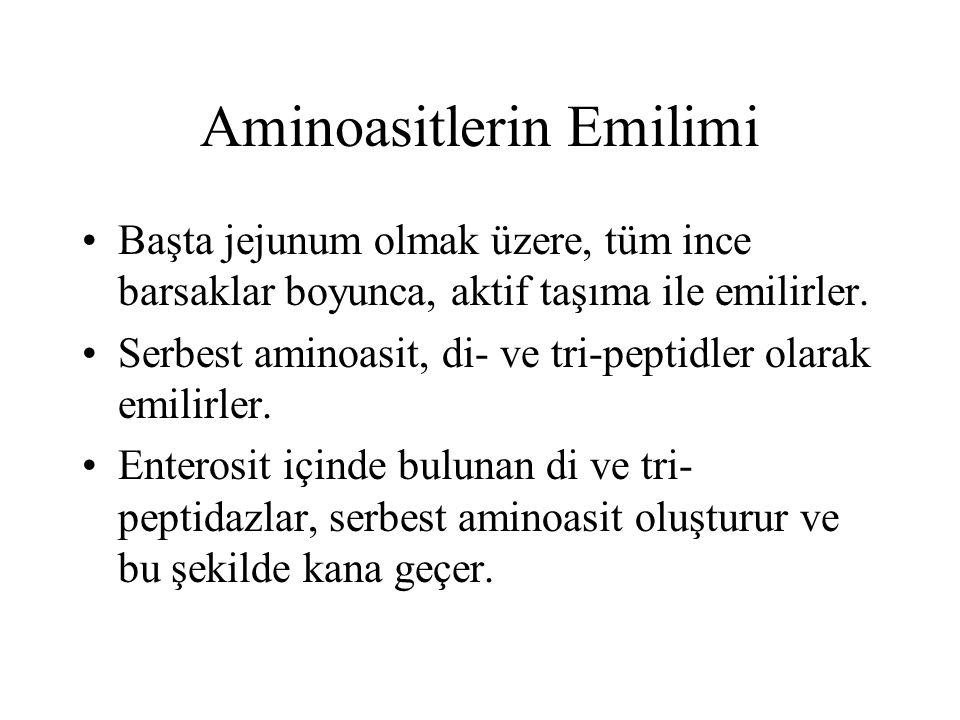 Aminoasitlerin Emilimi