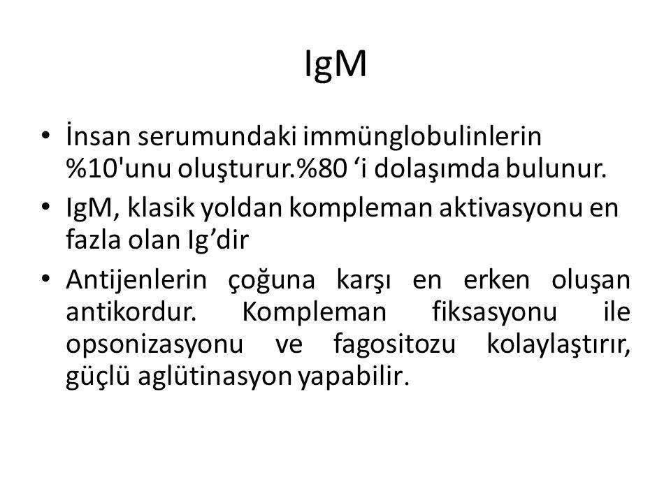 IgM İnsan serumundaki immünglobulinlerin %10 unu oluşturur.%80 'i dolaşımda bulunur. IgM, klasik yoldan kompleman aktivasyonu en fazla olan Ig'dir.