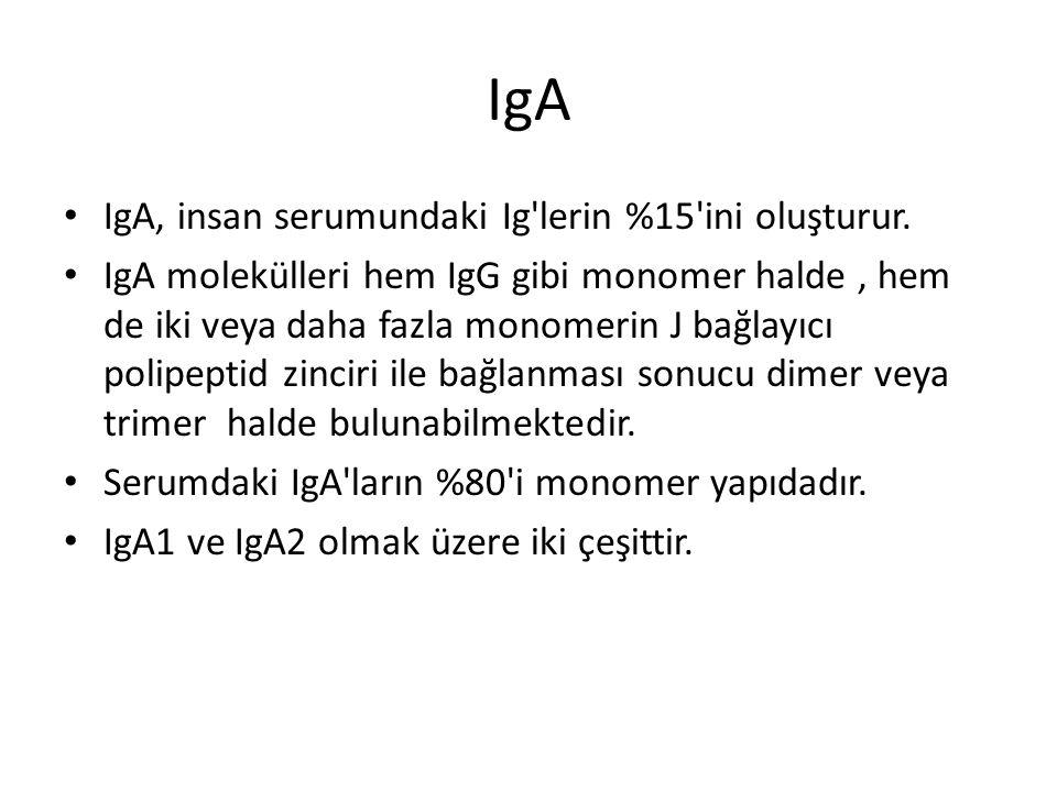 IgA IgA, insan serumundaki Ig lerin %15 ini oluşturur.