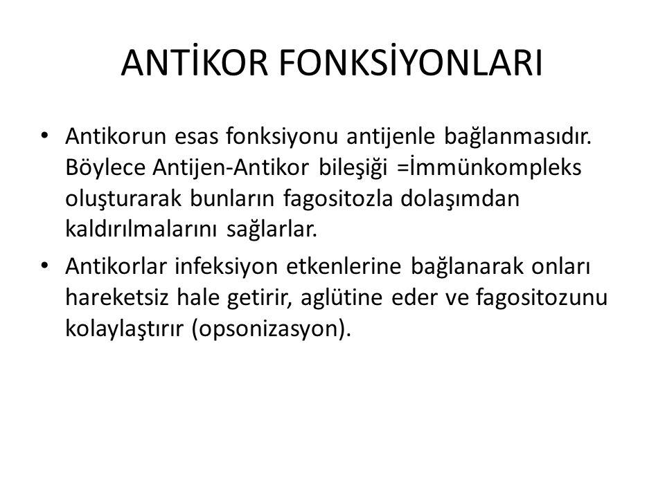 ANTİKOR FONKSİYONLARI