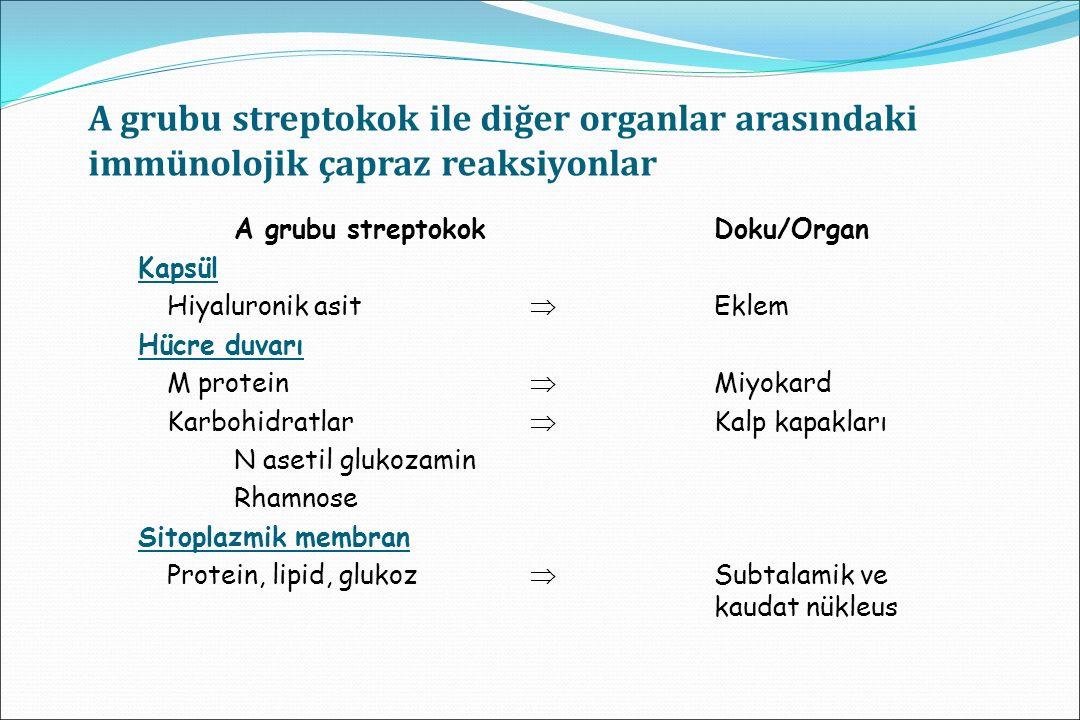 A grubu streptokok ile diğer organlar arasındaki immünolojik çapraz reaksiyonlar