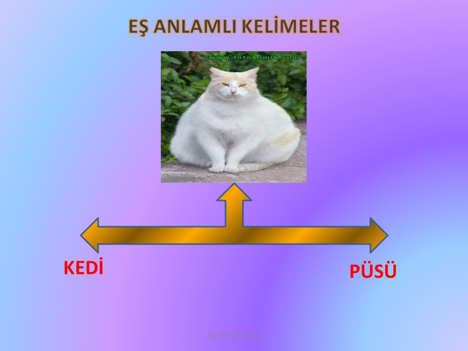 EŞ ANLAMLI KELİMELER KEDİ PÜSÜ …Egitimhane.com…