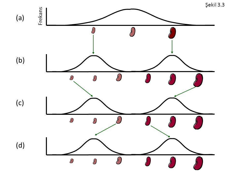 (a) (b) (c) (d) Şekil 3.3 Frekans