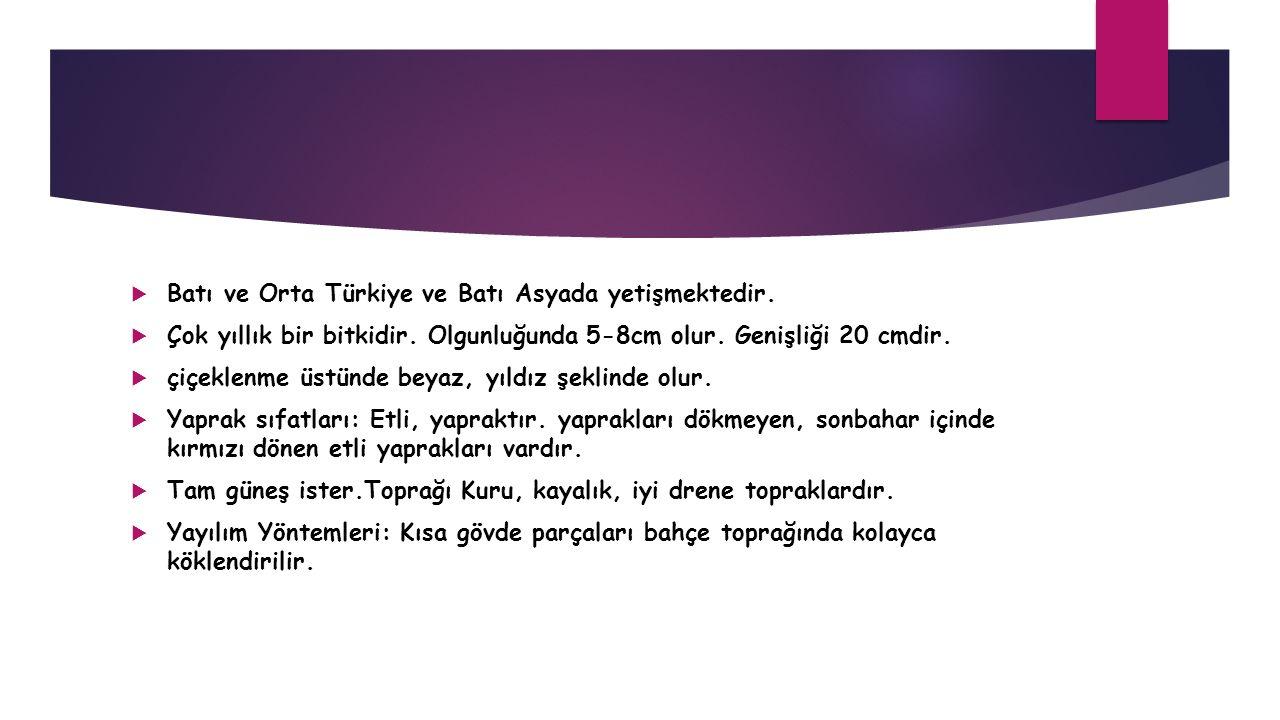 Batı ve Orta Türkiye ve Batı Asyada yetişmektedir.