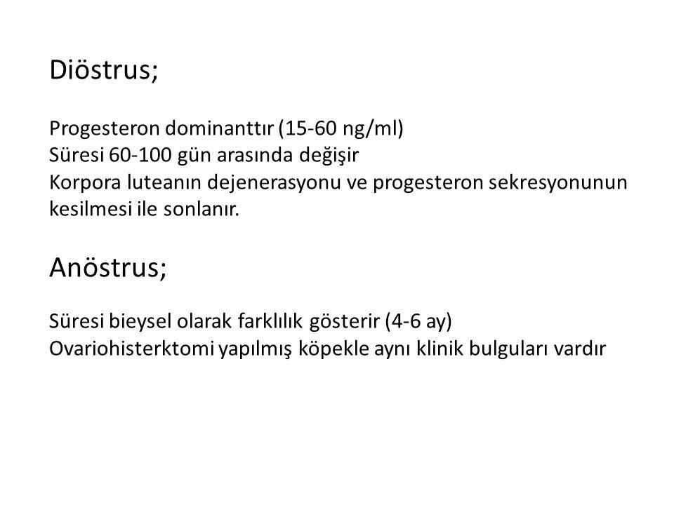Diöstrus; Anöstrus; Progesteron dominanttır (15-60 ng/ml)
