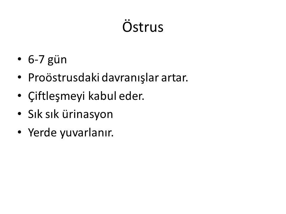 Östrus 6-7 gün Proöstrusdaki davranışlar artar.