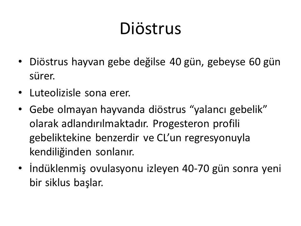 Diöstrus Diöstrus hayvan gebe değilse 40 gün, gebeyse 60 gün sürer.
