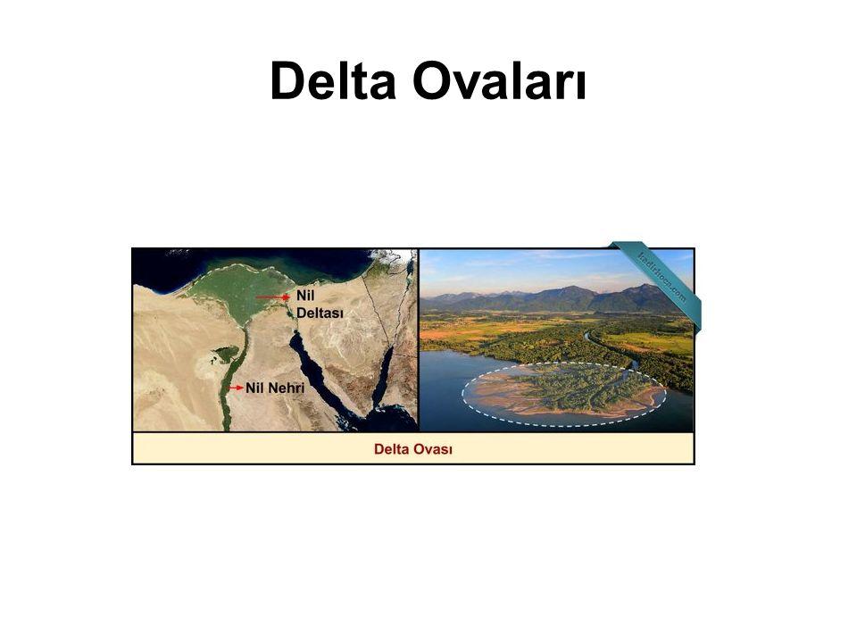 Delta Ovaları