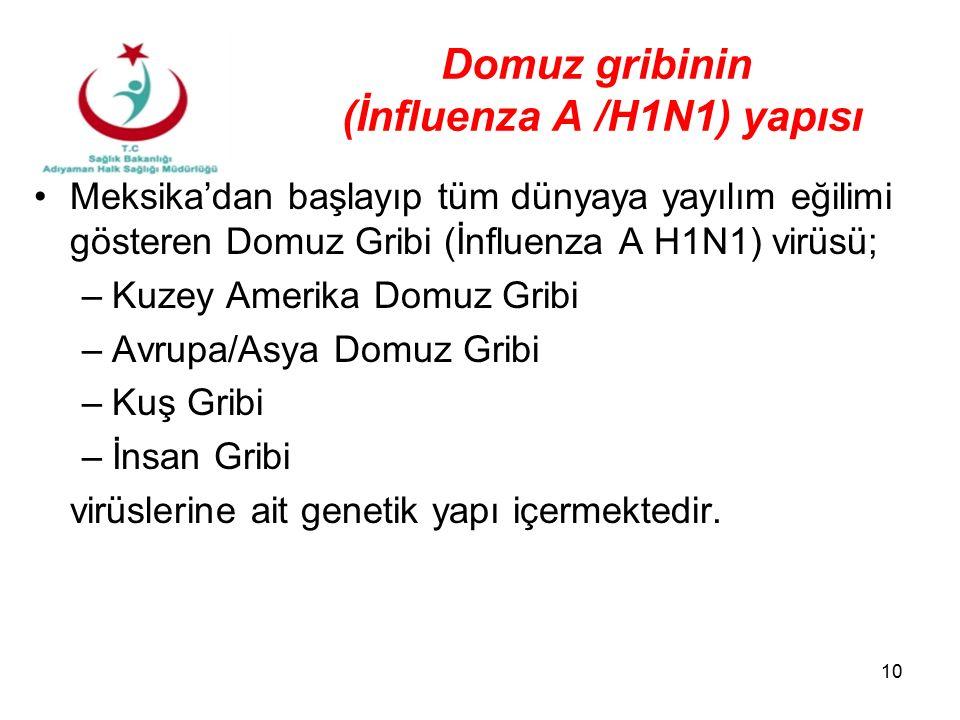 Domuz gribinin (İnfluenza A /H1N1) yapısı