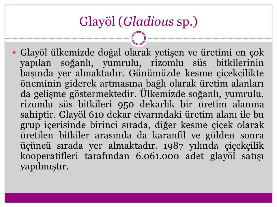 Glayöl (Gladious sp.)