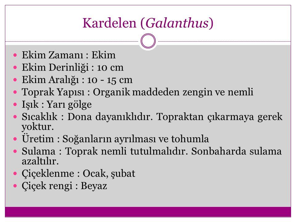Kardelen (Galanthus) Ekim Zamanı : Ekim Ekim Derinliği : 10 cm