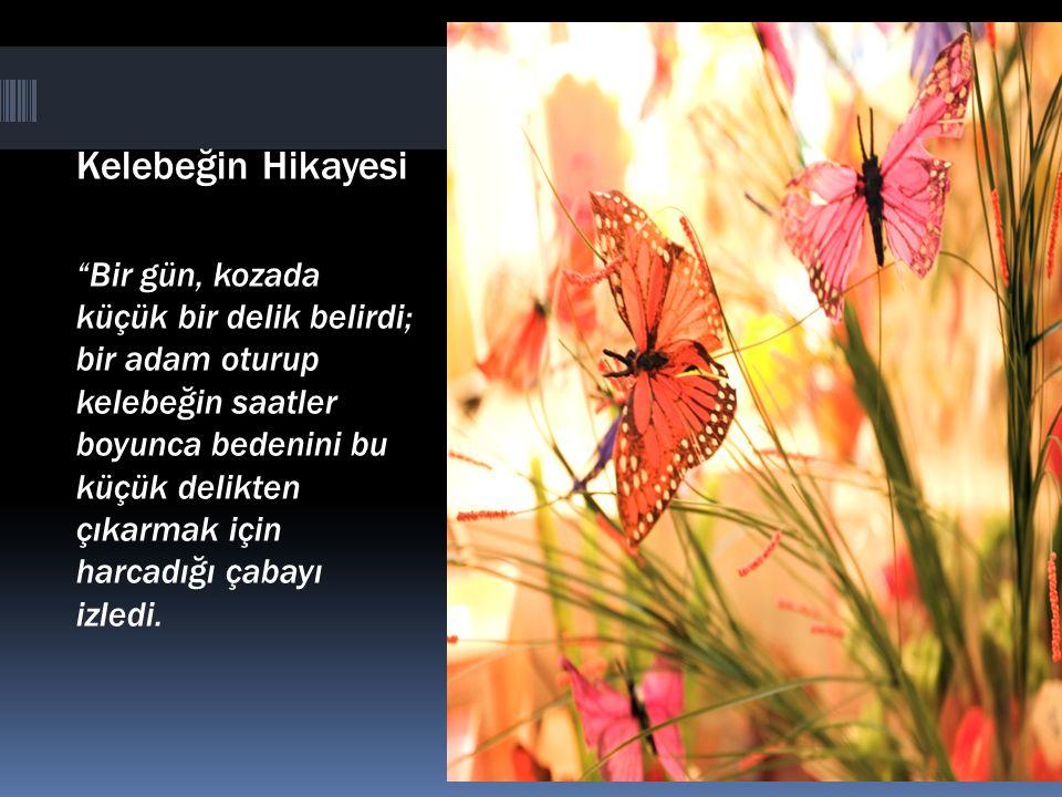 Kelebeğin Hikayesi