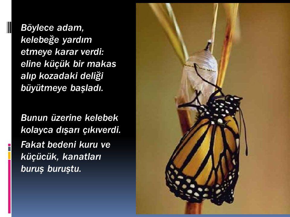 Böylece adam, kelebeğe yardım etmeye karar verdi: eline küçük bir makas alıp kozadaki deliği büyütmeye başladı.