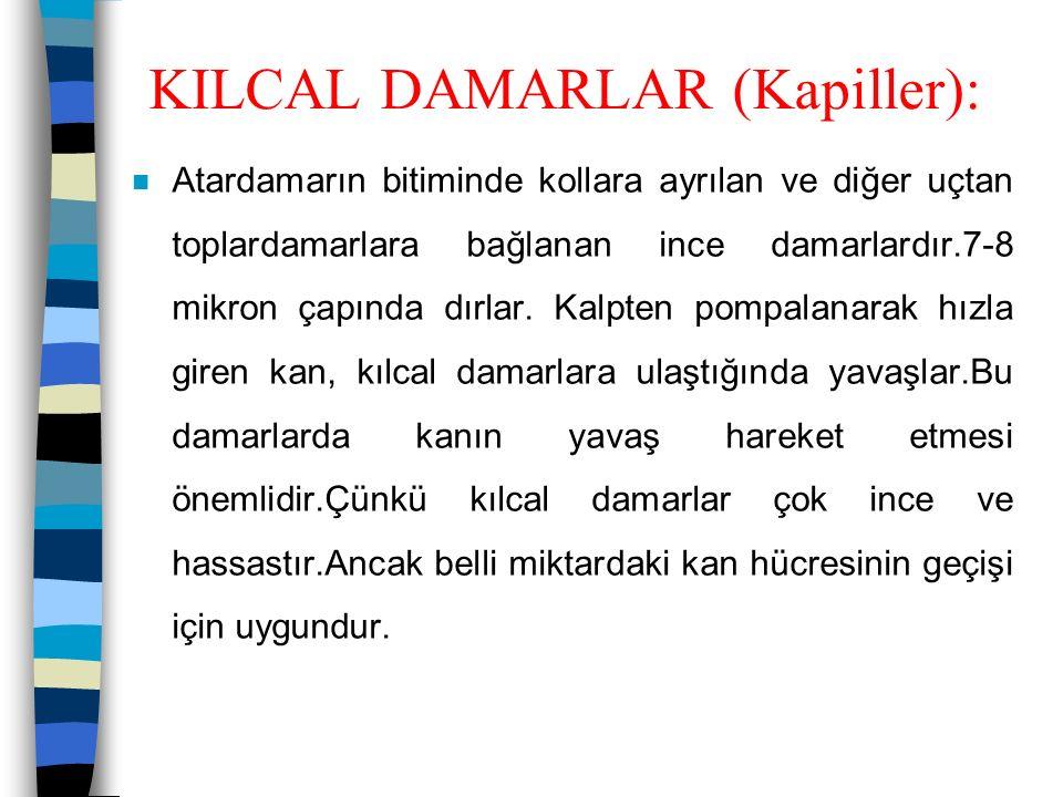 KILCAL DAMARLAR (Kapiller):