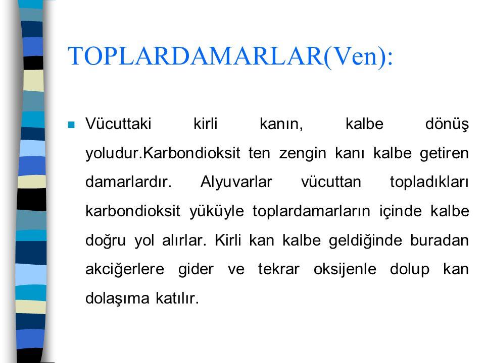 TOPLARDAMARLAR(Ven):