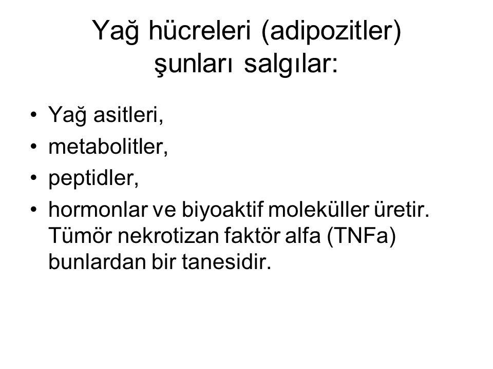 Yağ hücreleri (adipozitler) şunları salgılar: