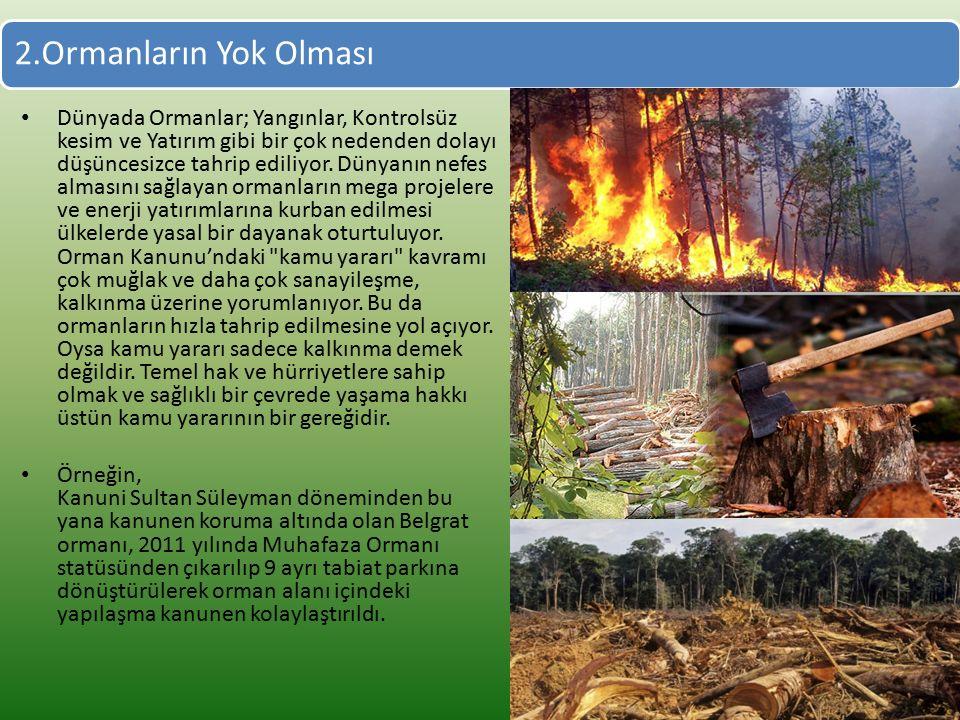 2.Ormanların Yok Olması