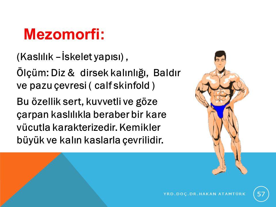 Mezomorfi: (Kaslılık –İskelet yapısı) ,