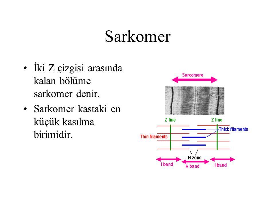 Sarkomer İki Z çizgisi arasında kalan bölüme sarkomer denir.